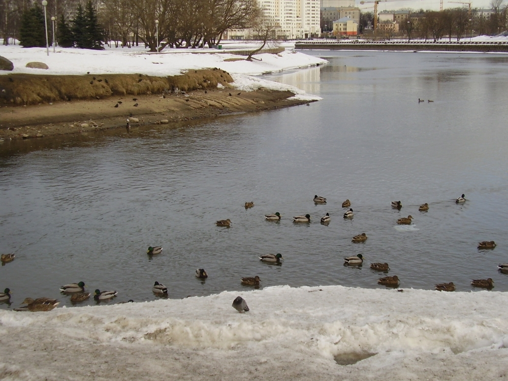 Минск в марте фото