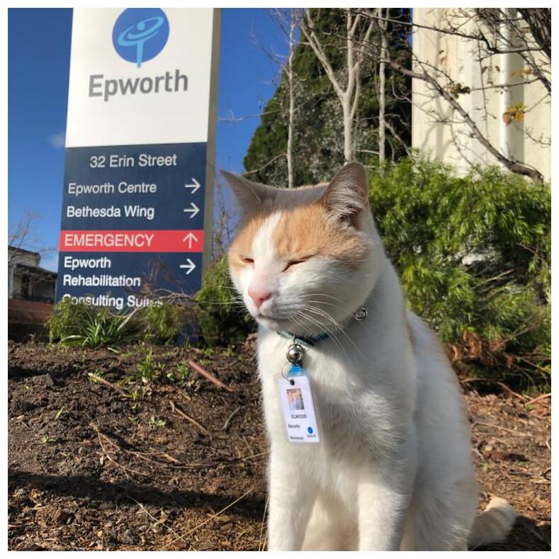 14 котов, которые вкалывают на реальной работе: пользователи поделились снимками необычных сотрудников, нашедших свое призвание