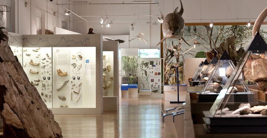 Венгерский музей естественных наук