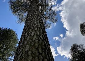 Шотландский реликтовый лес Бенмор
