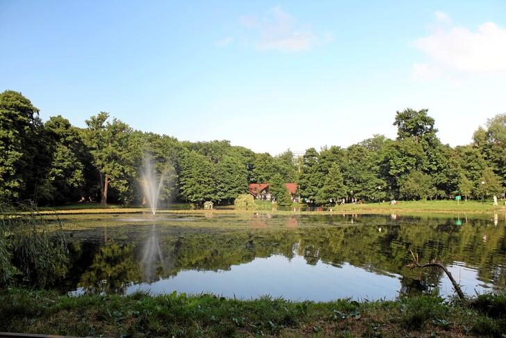 Тортилин пруд в Городском парке