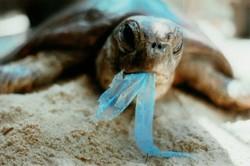 На Гавайи идет мусорная волна из Японии