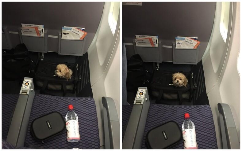 12 фото неожиданных попутчиков, которые внезапно оказались в соседнем кресле и покорили сердца всех пассажиров