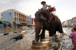 В Тайланде объявлен сезон эпидемий