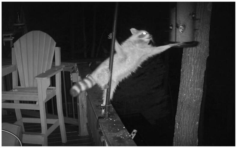 14 животных, сфотографированных в самый неловкий момент (когда ужасные кадры превращаются в шикарные)