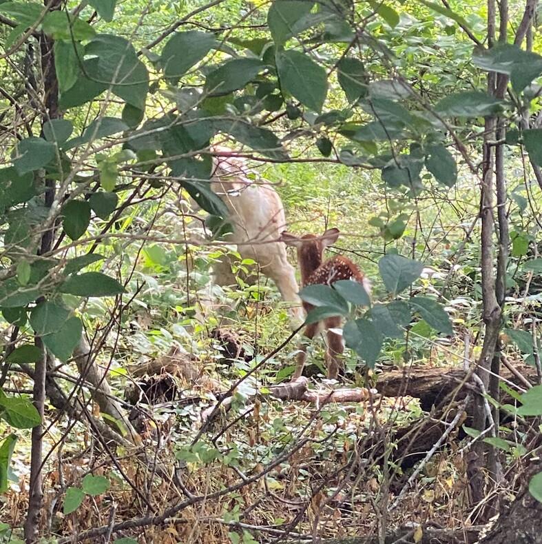 Собака, заметив в озере тонущего олененка, бросилась к нему и вытащила на берег: трогательные фото чудесного спасения
