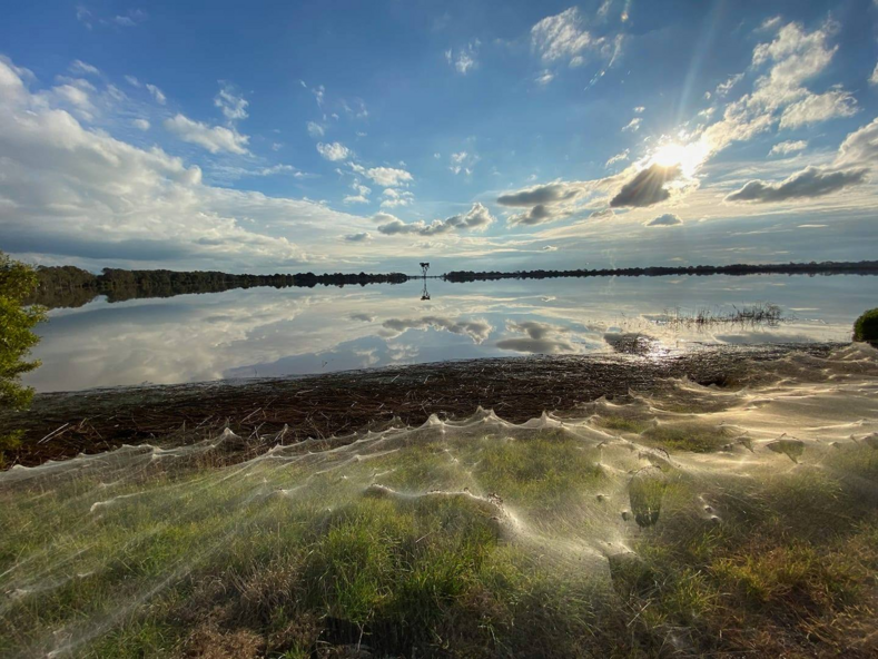 Фото в Австралии миллионы пауков сплели километры паутины, которая окутала половину штата