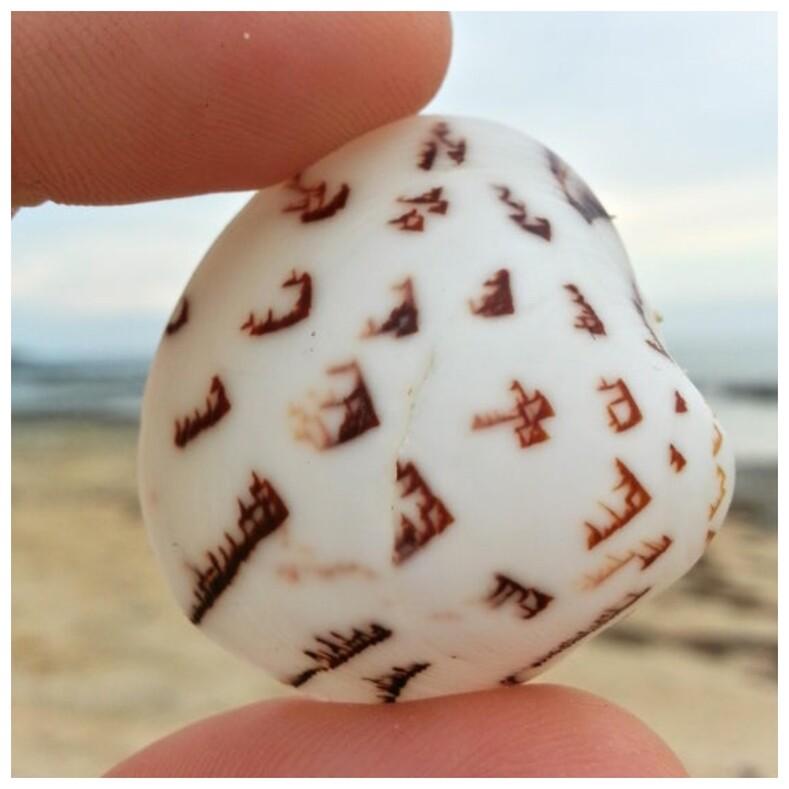 Необычные вещи, увиденные на пляже: 16 удивительных находок, которые сделали отдых еще интереснее