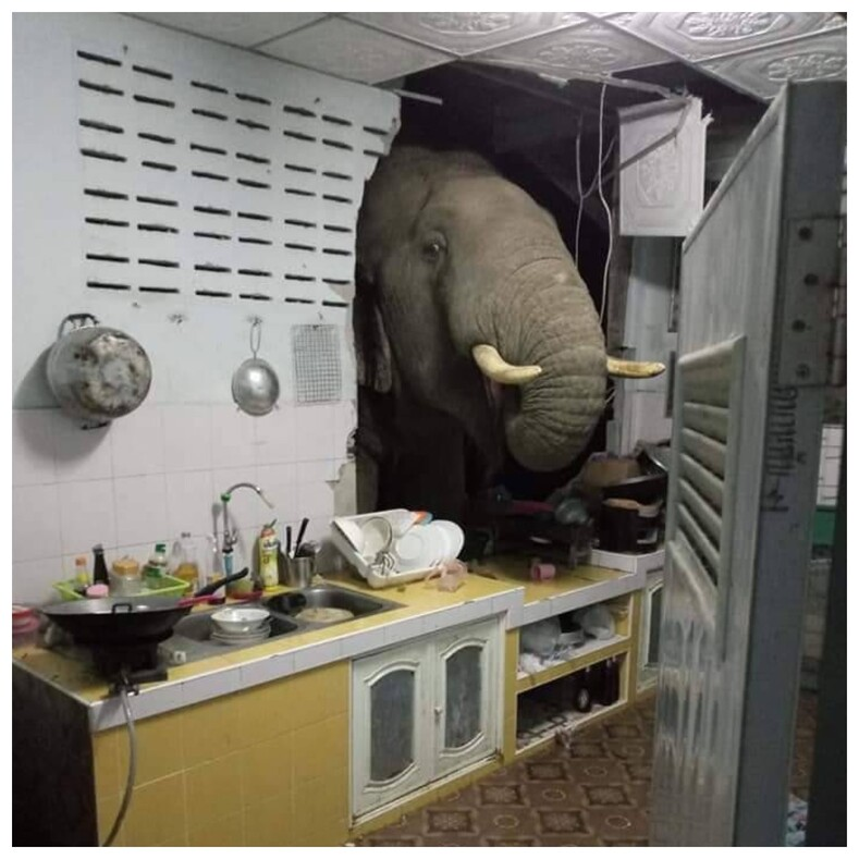 В Таиланде слон проломил стену дома и стащил из кухни пачку риса шокированные хозяева сняли грабителя на телефон