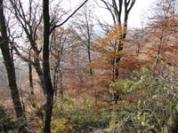 Венский лес осенью