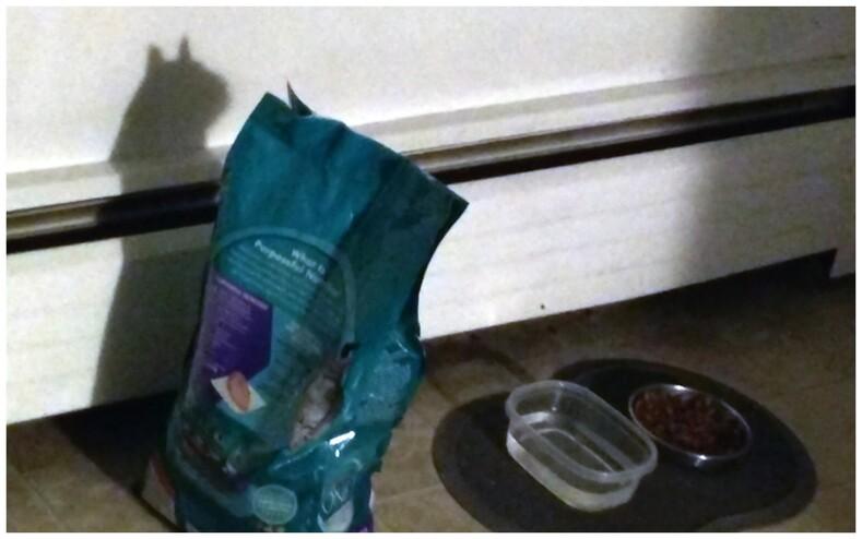 16 фотоиллюзий, на которые придется взглянуть дважды, чтобы найти кота