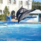 Аквапарк Dolphina
