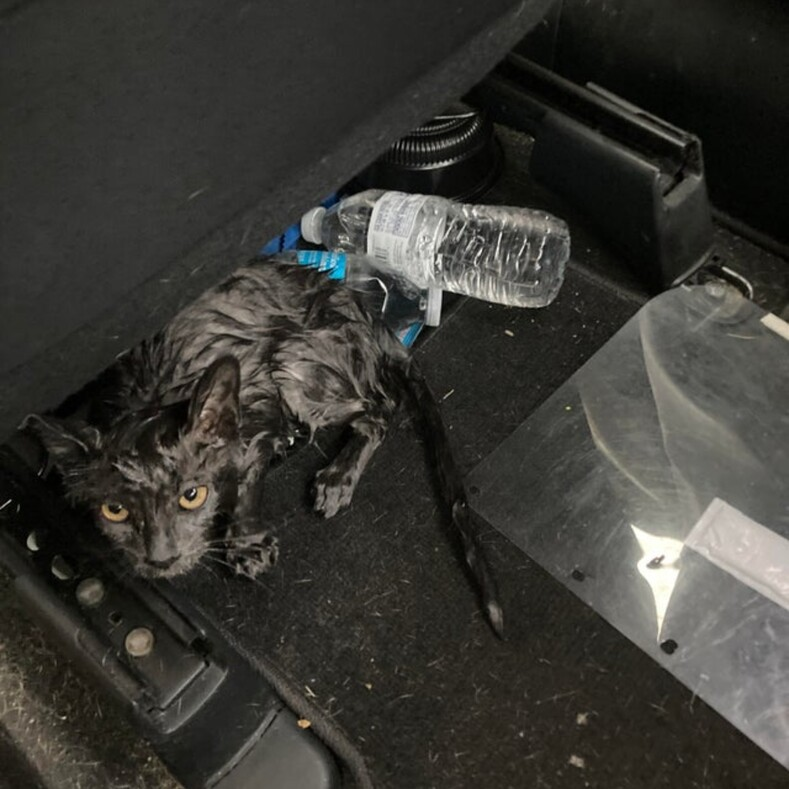 Трогательные фотоистории со счастливым концом: пользователи рассказали, как случайно спасли животных от гибели, и это достойно уважения