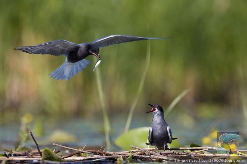 Исследуйте Поморский край наблюдая за птицами