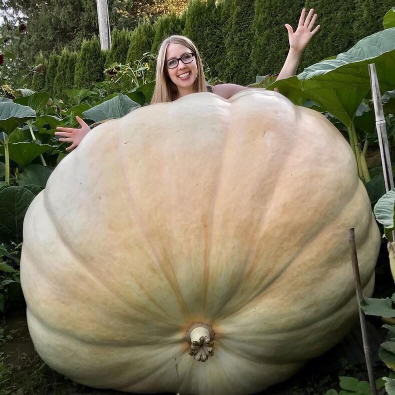 14 необычныхфруктов иовощейгигантов, которыми похвастались пользователи соцсетей: когда размеры урожая удивили самих фермеров