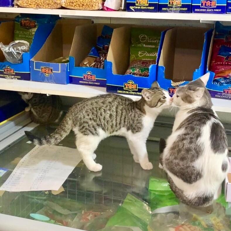 Повзгляду понятно, кто здесь хозяин фото котов, захвативших супермаркеты ирассчитывающих, что выхорошенько здесь раскошелитесь (выбирайте  вкусняшка или кусь)