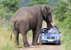В Тайланде на туриста упал слон