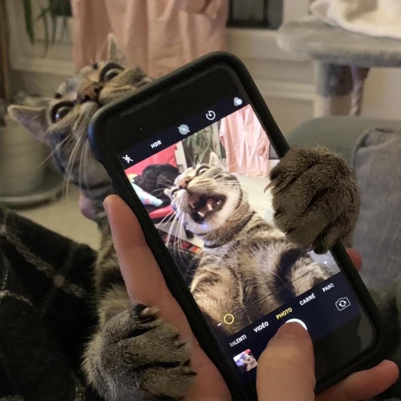 15 примеров, доказывающих, что домашние животные иногда творят необъяснимые и безумные вещи, но от этого становятся только смешнее и милее