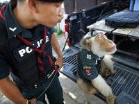 В полицию Таиланда принимают… обезьян!