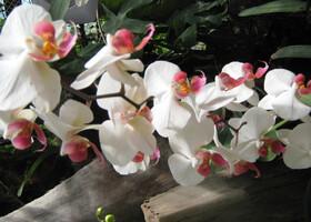 Орхидеевая оранжерея