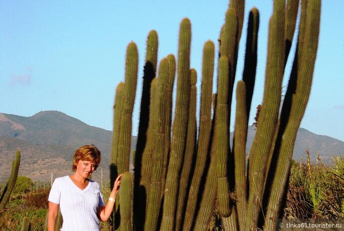 Малый Север Чили - Лос Мольес, Лос Вилос