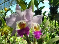 На Хайнане создадут самый большой парк орхидей