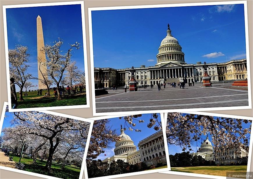 Вашингтон (DC) во время цветения сакуры.