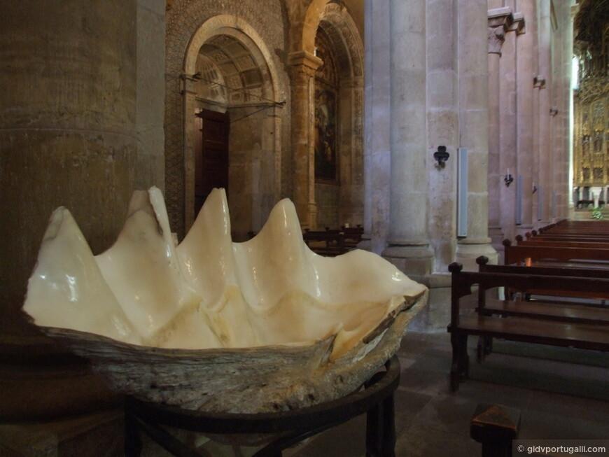 Старый Кафедральный Собор и самая что ни на есть раковина из Индийского Окияну