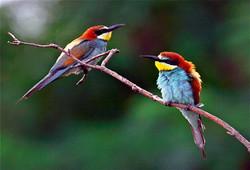 Леса на Кипре охватят «птичьи гонки»