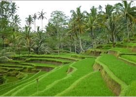 Двухнедельный трип по Индонезии: о.Бали, Убуд (часть 2)