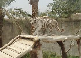 Зоопарк Ал-Айна