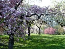 Ботанический сад Нью-Йорка научит правильно лазать по деревьям