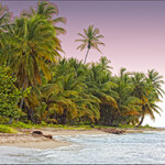 Saona Island (Dominicana rep.)