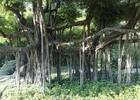 Liuhuahu Park2.jpeg