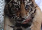 Сафари-парк тигров 99.JPG