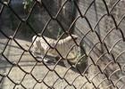 Сафари-парк тигров 7.JPG