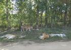 Сафари-парк тигров 1.JPG