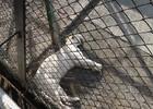 Сафари-парк тигров 94.JPG
