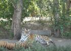 Сафари-парк тигров 3.JPG