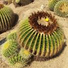 Тропический ботанический сад «Пинья де Роса»