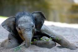 В Бангкоке запретили кормить слонов