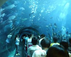 В Анталье открывается один из крупнейших в мире аквариумов