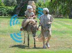 Израильские ослы превратились в Wi-Fi-споты