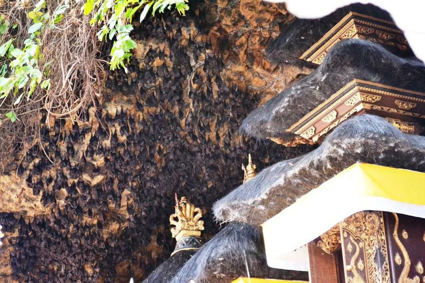 Летучие мыши в пещере храма Гоа Лавах