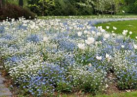 Ботанический сад Франкфурта Palmen Garten