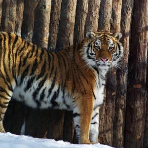 Дальневосточная флора и фауна!