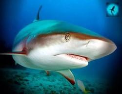 На пляж отеля в Таиланде заплыла акула