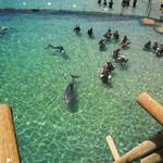 Эйлат. Купание с дельфинами.