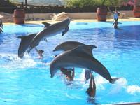 Испания Бенидорм Зоопарк 2009