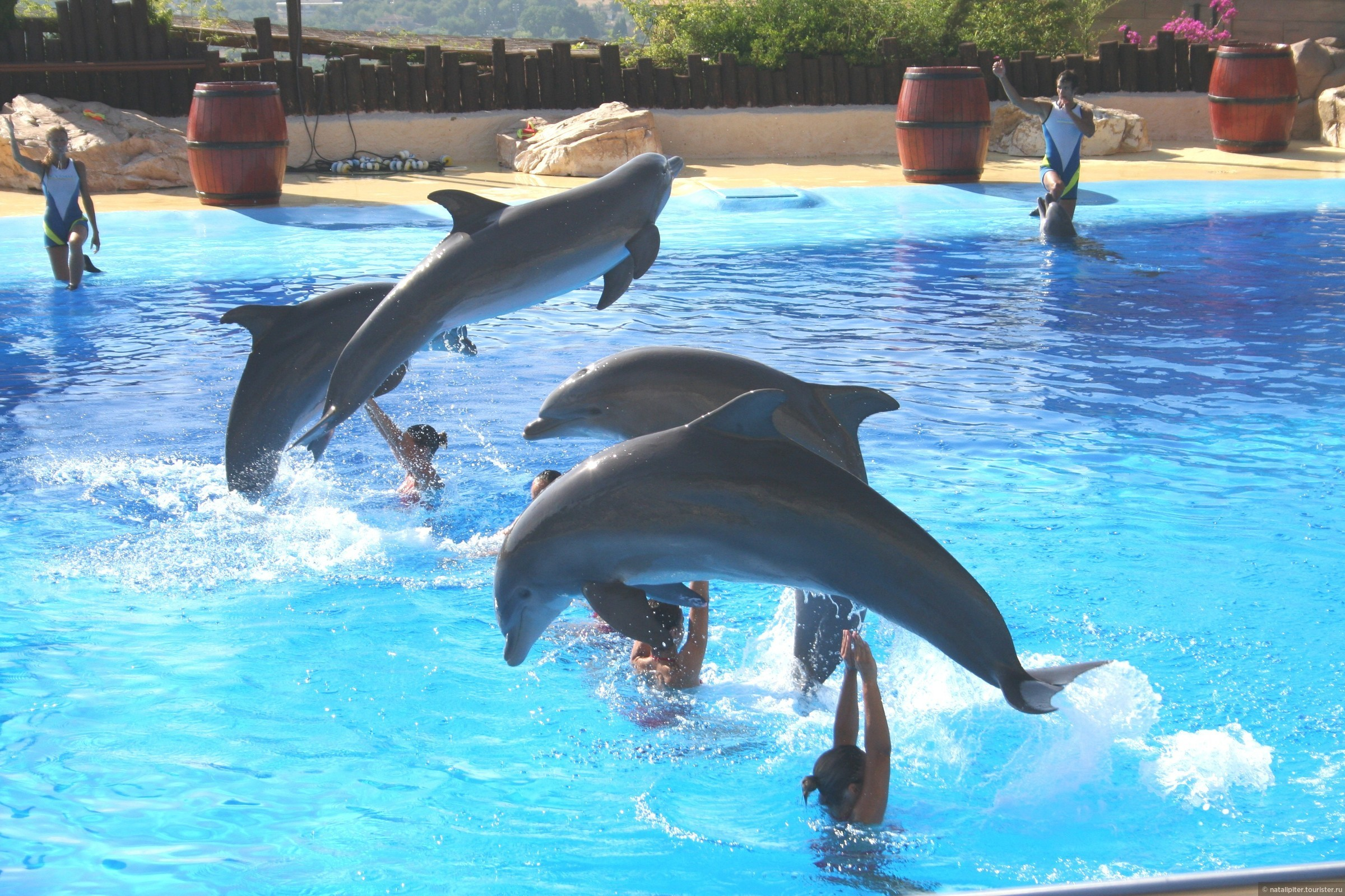 Зоопарк в испании бенидорм испания